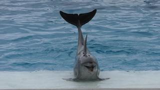 鯨目 Cetacea