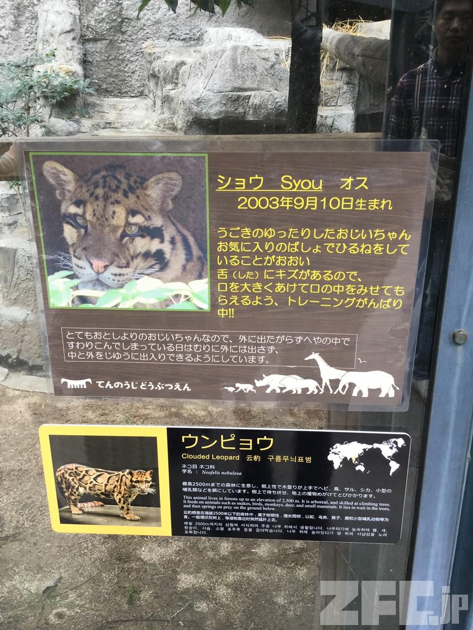 天王寺動物園のウンピョウ掲示物
