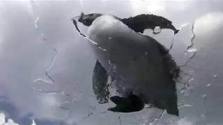 ペタペタマーチ・ペンギン餌付けショー (下田海中水族館) 2018年3月18日