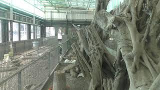 鳥舎 (ズケラン養鶏場 ミニミニ動物園) 2019年5月12日
