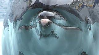 イルカショー (越前松島水族館) 2019年8月19日