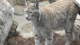 王子猫長屋 (王子動物園) 2019年1月10日