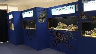 さかなクンコーナー (久慈地下水族科学館 もぐらんぴあ水族館) 2019年8月11日