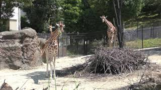 アフリカの草原 (いしかわ動物園) 2019年8月18日