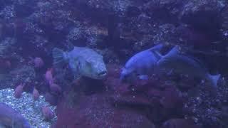 『岩礁の魚』水槽 (串本海中公園 水族館) 2018年12月27日