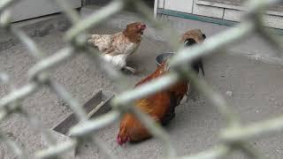 鳥舎 (八戸公園 こどもの国) 2019年8月10日