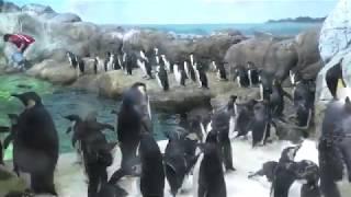 海獣館の南極ペンギン水槽 (アドベンチャーワールド) 2020年1月18日