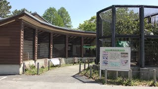 野鶏と肥後五鶏 (熊本市動植物園) 2019年4月18日