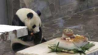 ジャイアントパンダ 『タンタン』の誕生日会 (王子動物園) 2018年9月16日