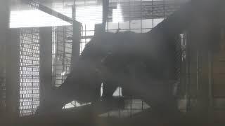 ナキガオオマキザル (熊本県ふれあいファミリー牧場) 2019年4月18日