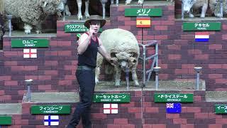 シープショー (マザー牧場) 2018年6月30日