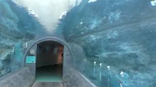 ぺんぎん館の水中トンネル (旭山動物園) 2018年2月11日