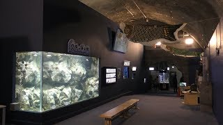 久慈の海水槽 (久慈地下水族科学館 もぐらんぴあ水族館) 2019年8月11日