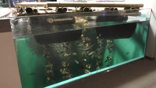 海のめぐみ~カキいかだ水槽 (宮島水族館 みやじマリン) 2018年5月20日