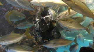 富山湾大水槽お食事タイム (魚津水族館) 2019年8月15日