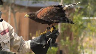 フリーフライトバードショーパフォーマンス Wings [3/6] (神戸どうぶつ王国) 2021年3月29日