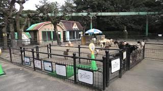 ふれあい広場 (宮崎市フェニックス自然動物園) 2019年12月9日