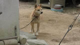 イヌ (小豆島 銚子渓 自然動物園 お猿の国) 2019年2月27日