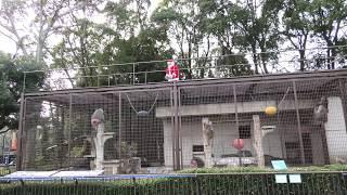 モンキータウン の クリスマスイベント (愛媛県立 とべ動物園) 2019年12月25日