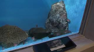 北の海の魚たち (のとじま水族館) 2019年8月17日