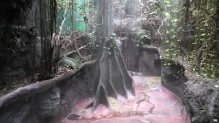 熱帯雨林館のジャングルタイム (高知県立のいち動物公園) 2019年12月21日