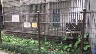 ツキノワグマ (福知山市動物園) 2019年11月24日