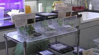 ギャラリー・ラボ (体感型カエル館 kawazoo【カワズー】) 2019年9月30日