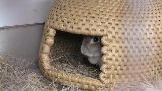 ウサギ と 猫ちぐら (大石ダム湖畔公園 小動物園) 2019年4月9日
