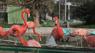 Flamingo (MISAKI KOEN Amusement Park, Osaka, Japan) January 19, 2020