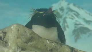 ペンギン の フィーディングタイム (鴨川シーワールド) 2018年6月16日