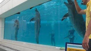 オキちゃん劇場・ダイバーショー (海洋博公園 国営沖縄記念公園) 2019年5月10日