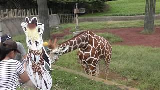 アミメキリンとけものフレンズパネル (千葉市動物公園) 2017年9月24日
