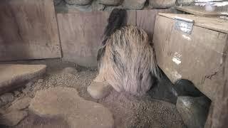 ナマケモノ と アルマジロ (みさき公園) 2020年1月19日