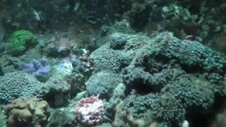 ウミウシ水槽 (いおワールドかごしま水族館) 2018年7月28日