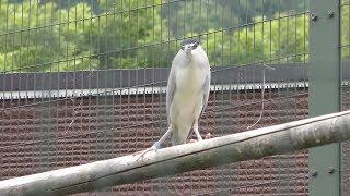 総合水鳥舎 (札幌市 円山動物園) 2019年6月13日