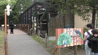 クジャク舎 (旭山動物園) 2019年6月20日