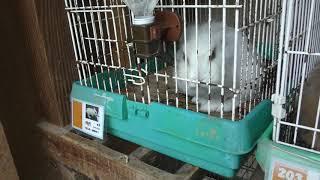 ウサギ (宝登山 小動物公園) 2019年10月2日