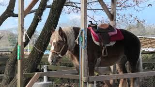 乗馬コーナー (阿蘇カドリー・ドミニオン) 2019年12月7日