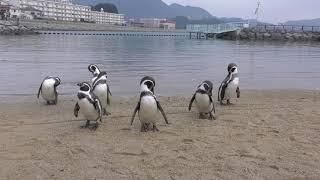 Fureai Penguin beach (Nagasaki Penguin Aquarium, Nagasaki, Japan) December 24, 2017