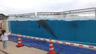 オキちゃん劇場 (海洋博公園 国営沖縄記念公園) 2019年5月10日
