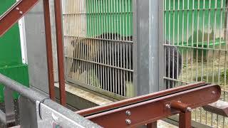 おやつを期待しているアヤメちゃん (東武動物公園) 2017年10月15日