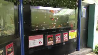 ミニミニ水族館 (智光山公園 こども動物園) 2018年7月22日