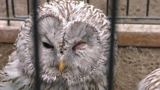 Owl forest (Kushiro City Zoo, Hokkaido, Japan) July 4, 2019