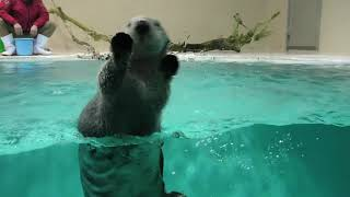 Sea otter Feeding time (TOBA AQUARIUM, Mie, Japan) December 25, 2020