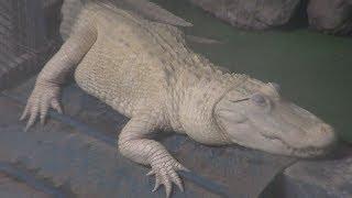生きている世界の爬虫類館 (東北サファリパーク) 2019年8月4日