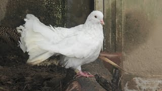 鳥舎 (真教寺公園「ふれあい体験学習」施設) 2020年10月11日