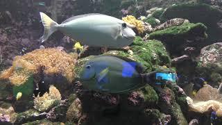 『光を食べる生き物』水槽 (串本海中公園 水族館) 2018年12月27日