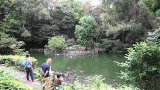 水鳥池 (智光山公園こども動物園) 2020年9月19日