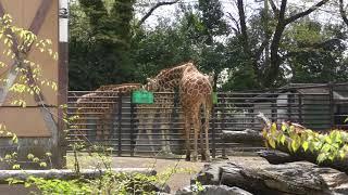 サバンナ園 (羽村市動物公園) 2018年4月8日