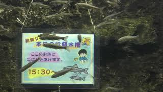 モツゴ と タモロコ (さいたま水族館) 2018年12月9日